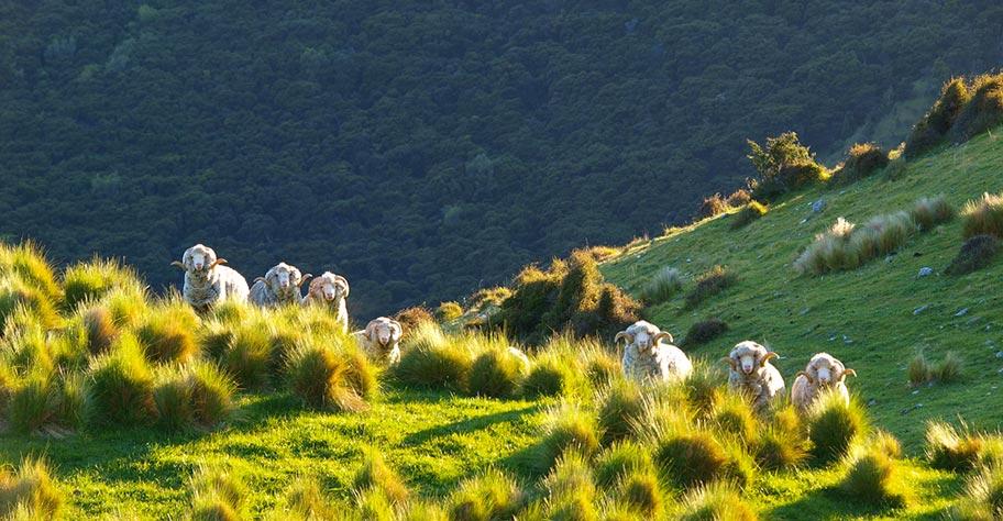 Neuseeland Reisetipps Länderinformationen